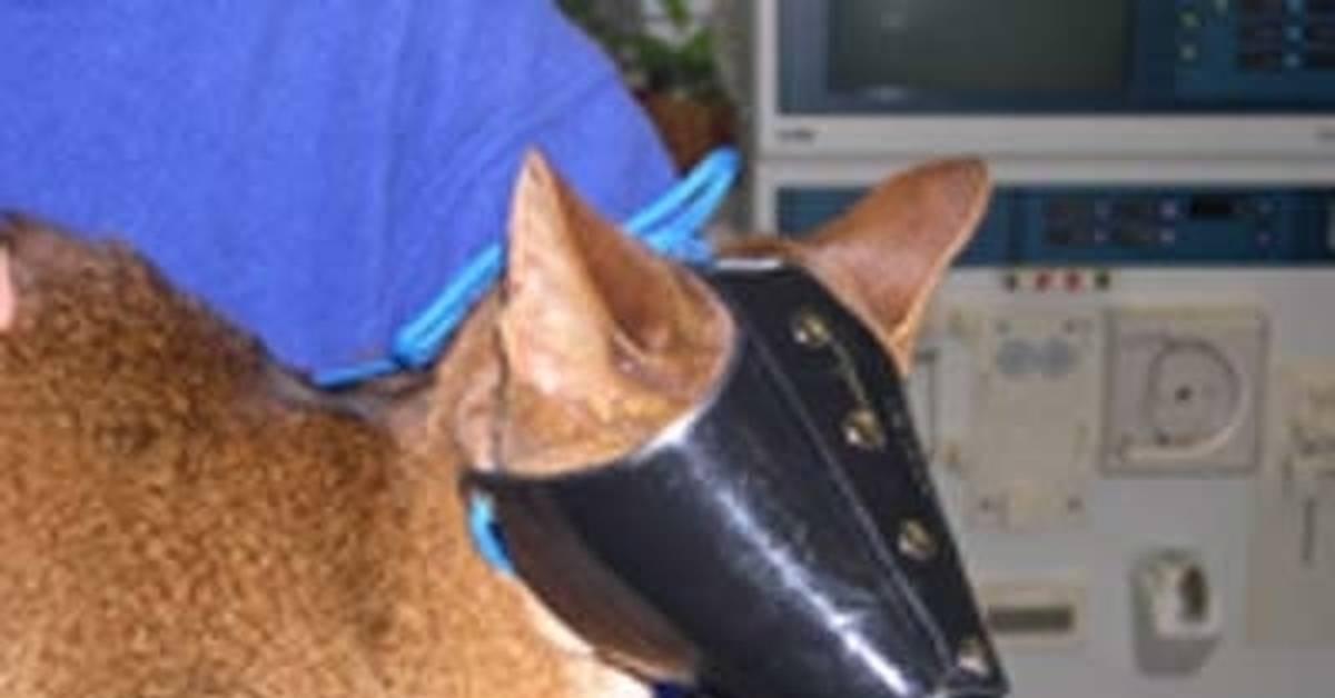 Выбираем готовый или шьем самостоятельно защитный воротник для собаки