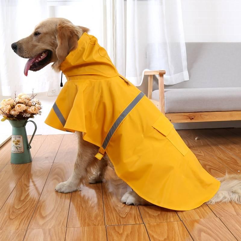 Одежда для собак – советы по выбору подходящих вещей и снятию мерок с животного