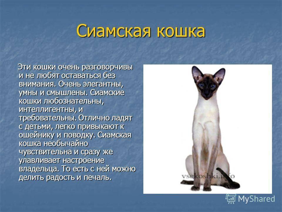 Сиамская кошка - описание породы и характера. фото и цена сиамских кошек. - petstime.ru