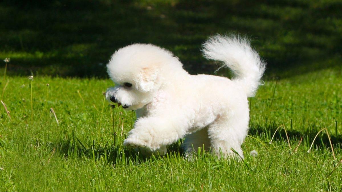 Гипоаллергенные породы собак: как выбрать безопасного питомца?