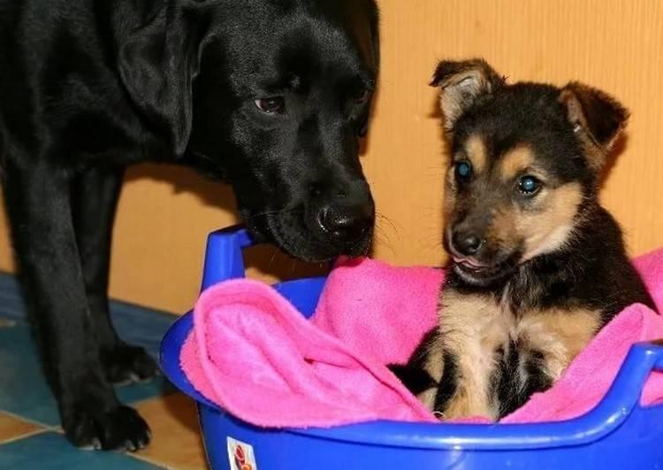 Как глистогонить собаку: простые правила обработки животного от гельминтов
