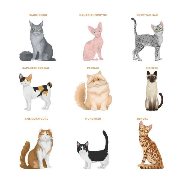 Какие бывают породы кошек? как выбрать кошку по породе?