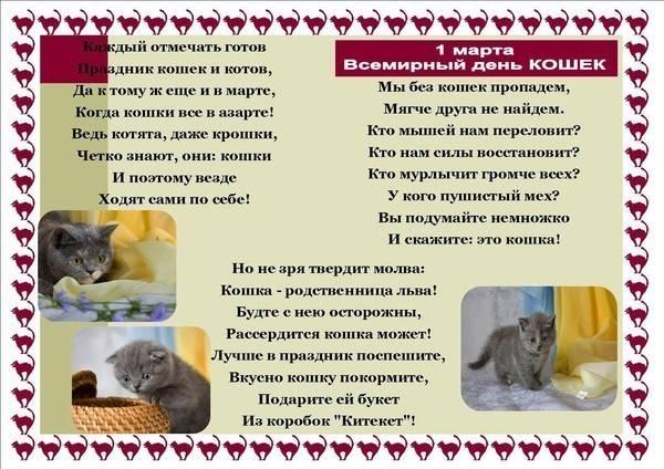 Всемирный день котов и кошек | 1 марта, россия