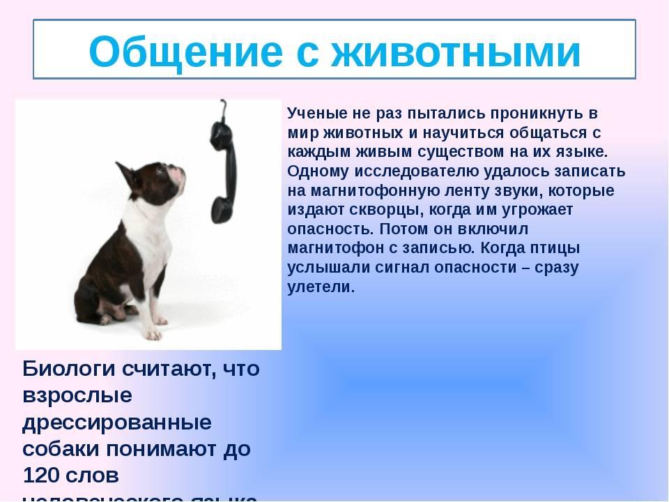 Понимают ли кошки человеческую речь: как определить, способы, расшифровка