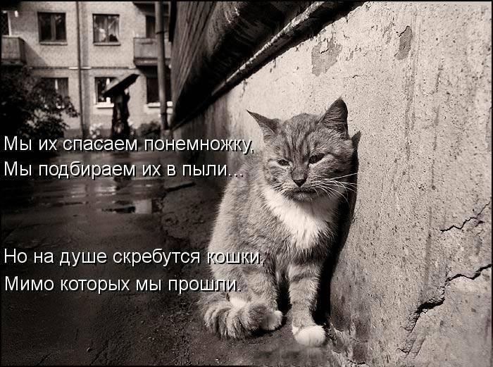 Какая память у котов?
