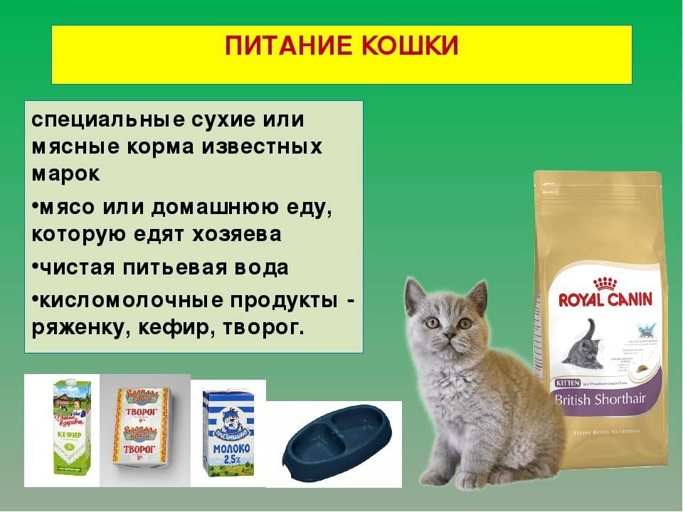 Как долго кошачья еда может не портиться? ~ коточек