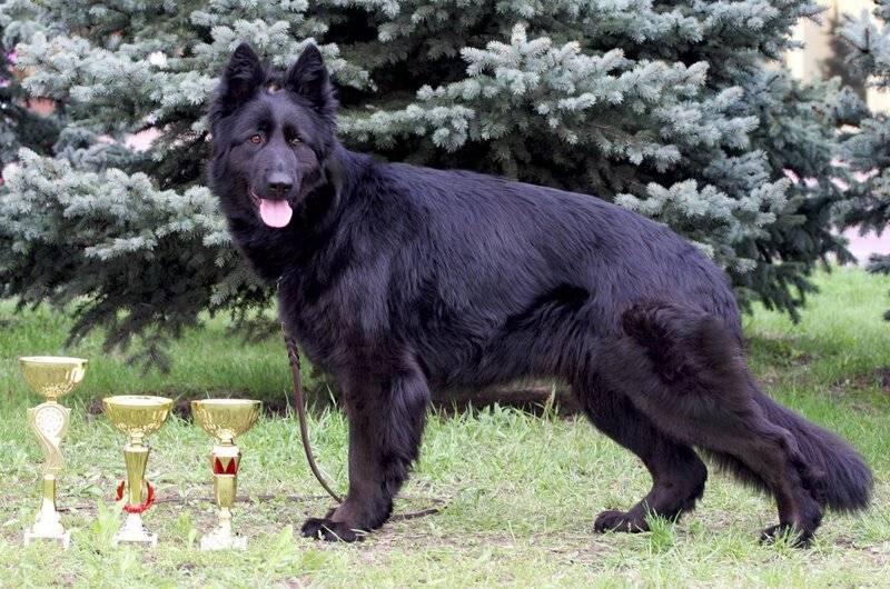 Окрас собак - от чего зависит цвет шерсти питомца