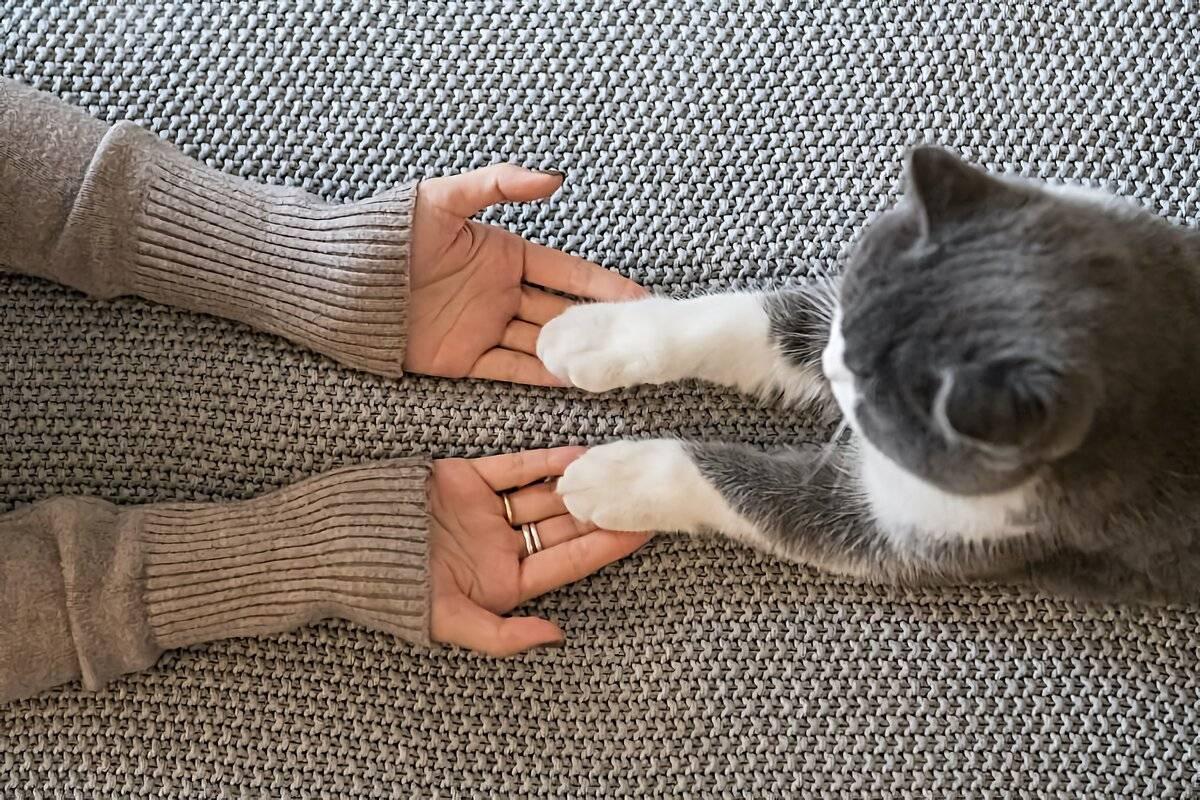 Как отучить котенка кусаться и царапаться быстро и просто