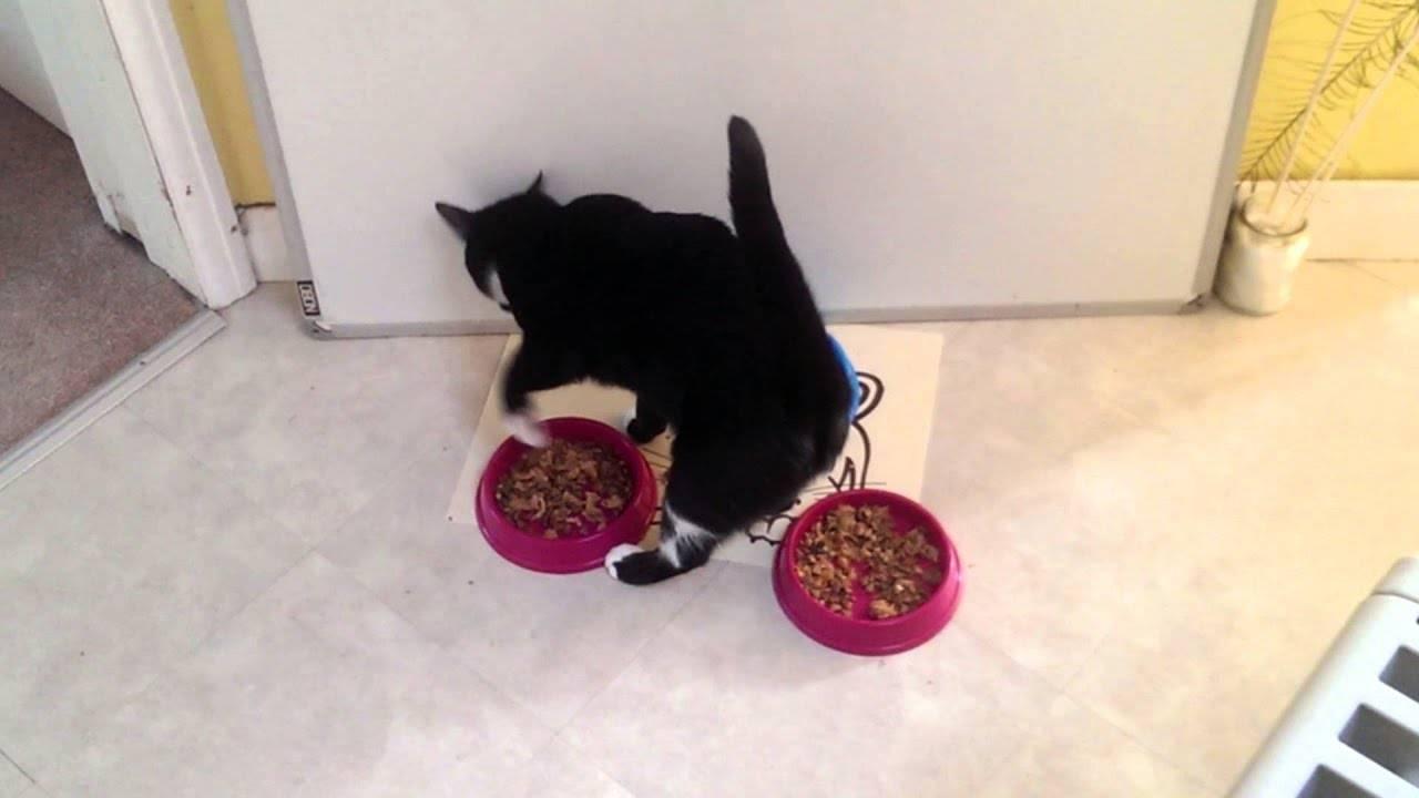 Почему кошки закапывают еду, как туалет, когда поели, и скребут пол рядом с миской?