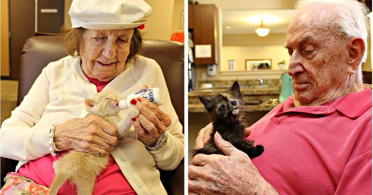 Как ухаживать за старой кошкой: полезные советы владельцам с опытом и новичкам