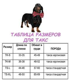 Температура у собаки