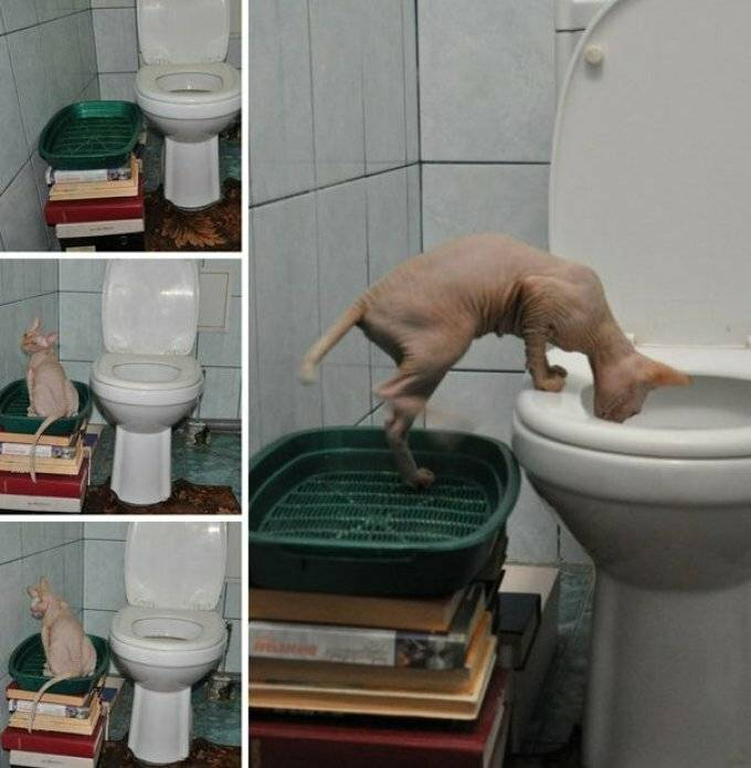 Когда котята начинают ходить в туалет самостоятельно