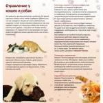 Кот отравился: что делать в домашних условиях