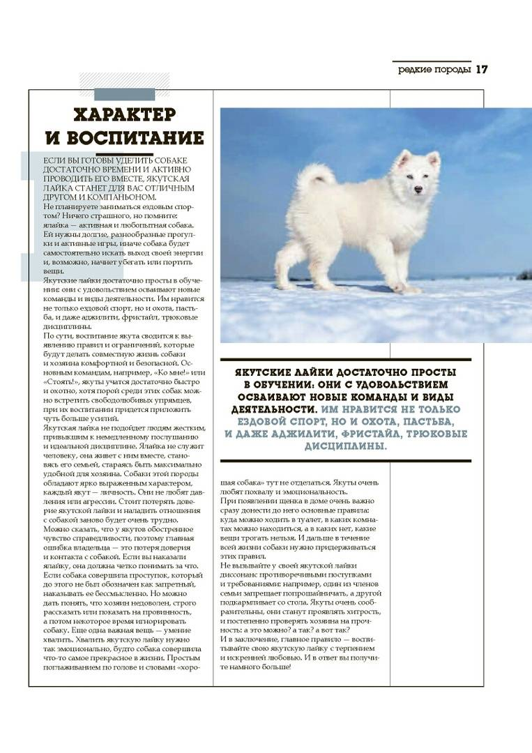 Якутская лайка: преданный компаньон из холодного севера