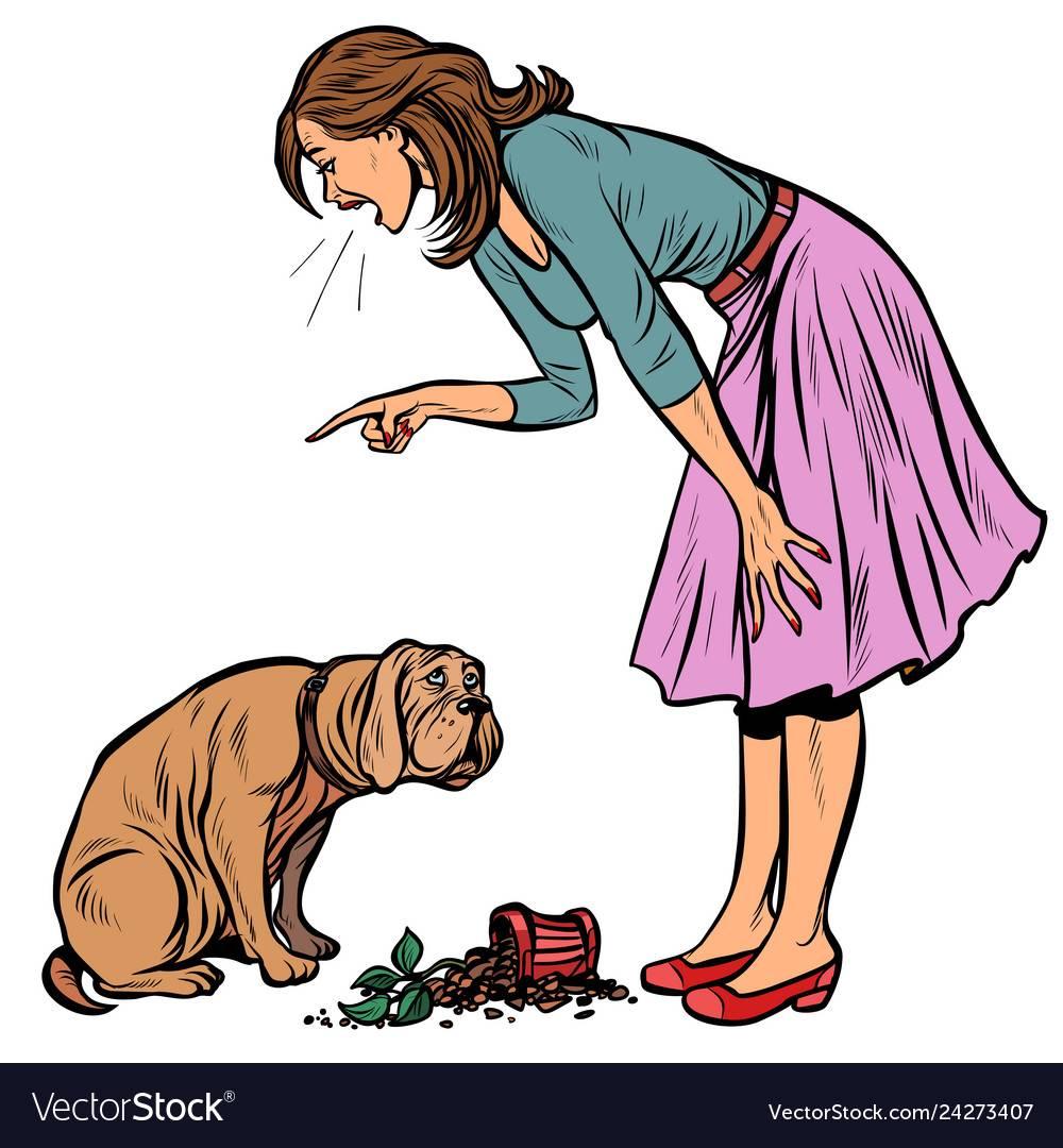Как наказывать щенка за непослушание правильно: виды наказания и запрещенные методы - truehunter.ru