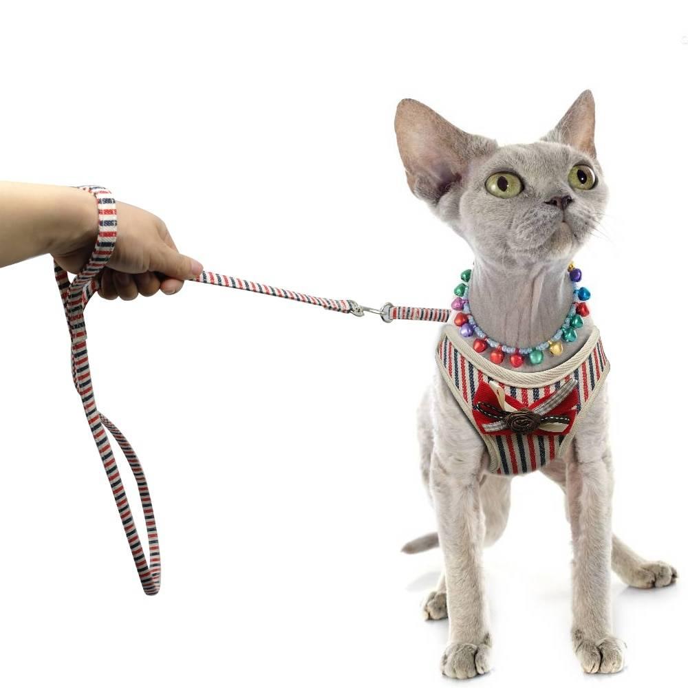 Как правильно выбрать и надеть шлейку для кошки
