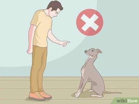 Как наказывать собаку: правильные методы и важность авторитета как наказывать собаку: правильные методы и важность авторитета