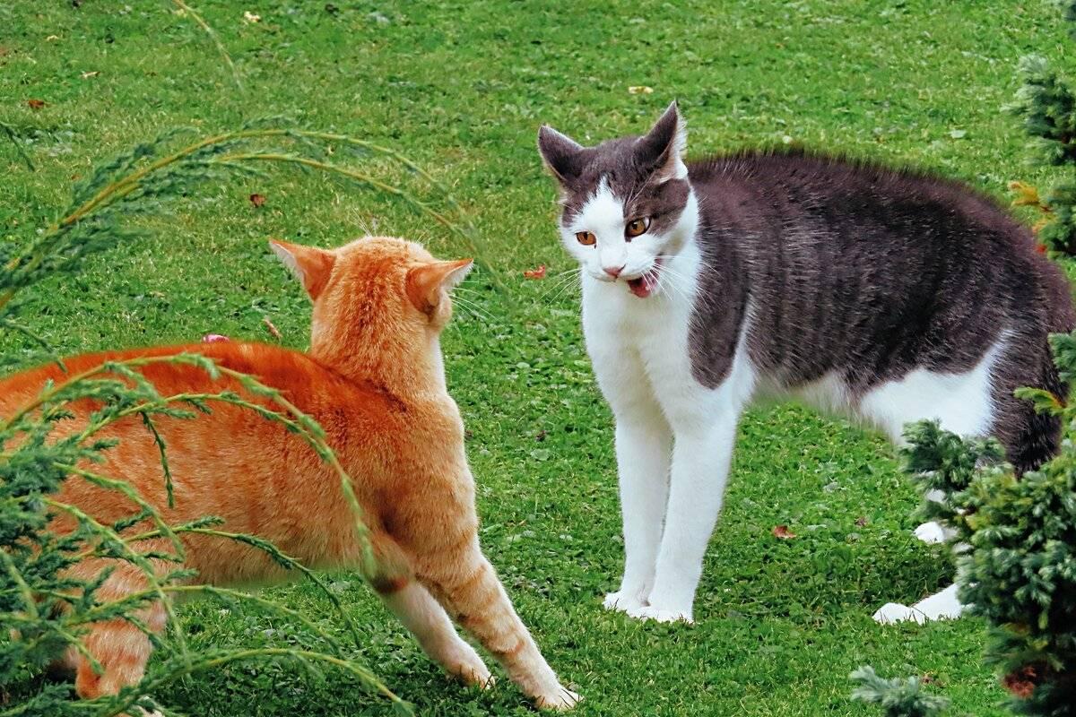 Чем дикий лесной кот отличается от домашних собратьев - мир кошек
