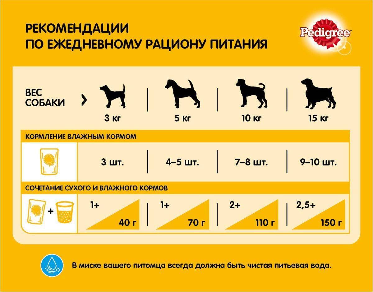 А вы знаете можно ли собаке свиные кости? важная информация