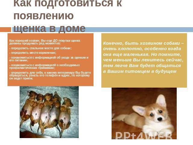 Как подготовить дом к появлению щенка   сайт о маленьких собачках и не только