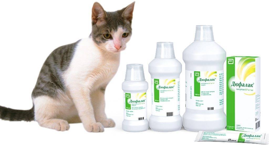Запор у кошки. советы от эксперта как помочь и что делать