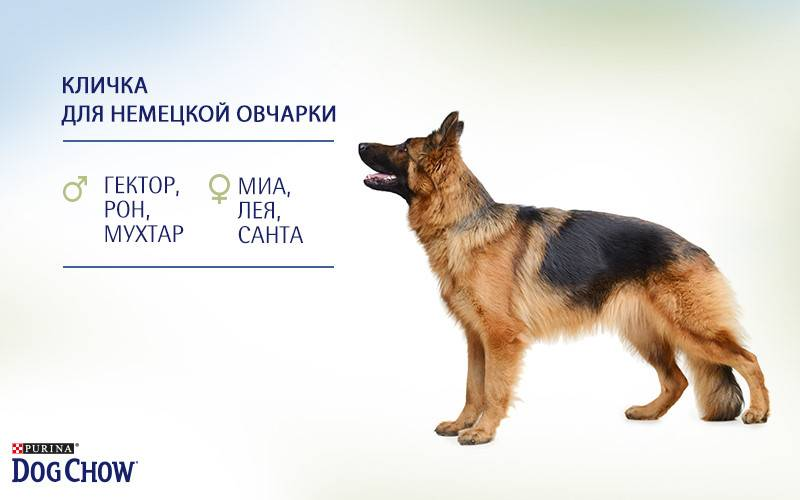 Немецкие клички для собак, красивые имена для щенков мальчиков и девочек.