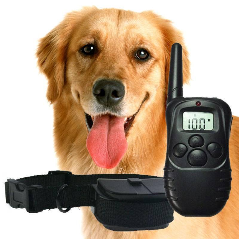 Ошейник антилай для собаки и его правильное использование