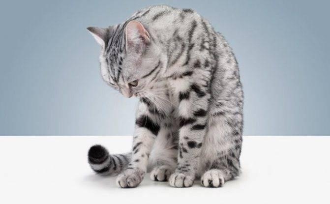 Что делать, если кошка часто дышит животом