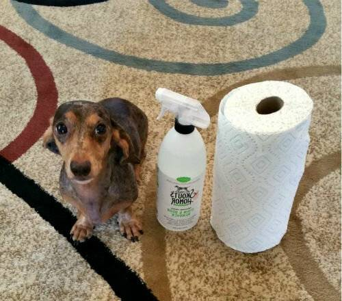 Неприятный запах от собаки: должна ли пахнуть собака, источники запаха, правила гигиены, как избавиться от запаха