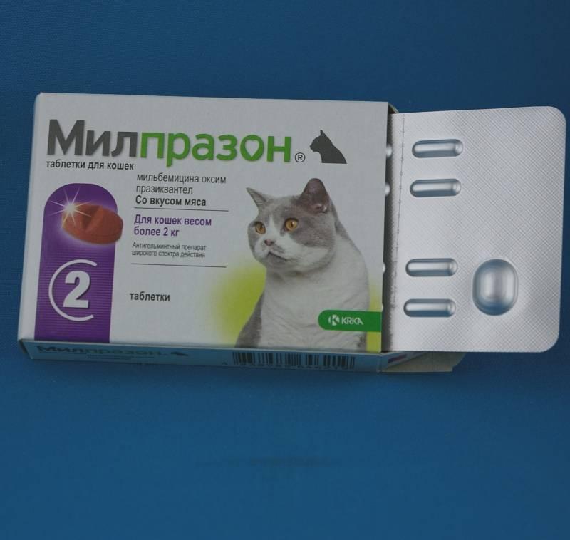 Милпразон для кошек: инструкция по применению, показания и противопоказания, аналоги, отзывы