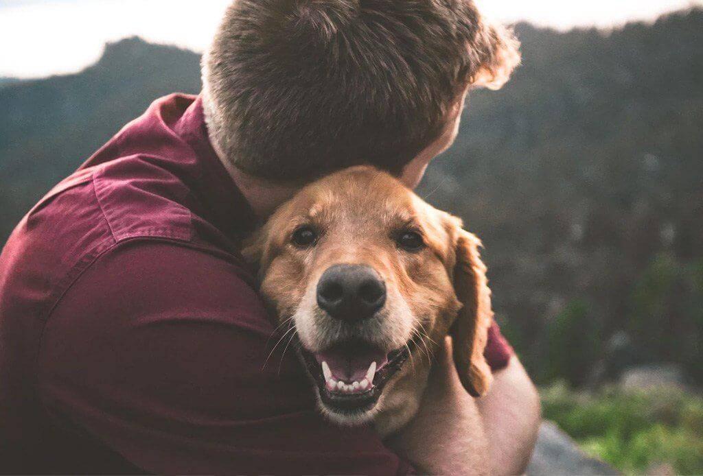 5 улыбающихся пород собак: могут ли собаки улыбаться