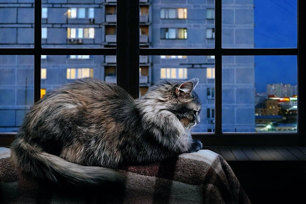 4 причины, почему кошка постоянно мяукает и орет