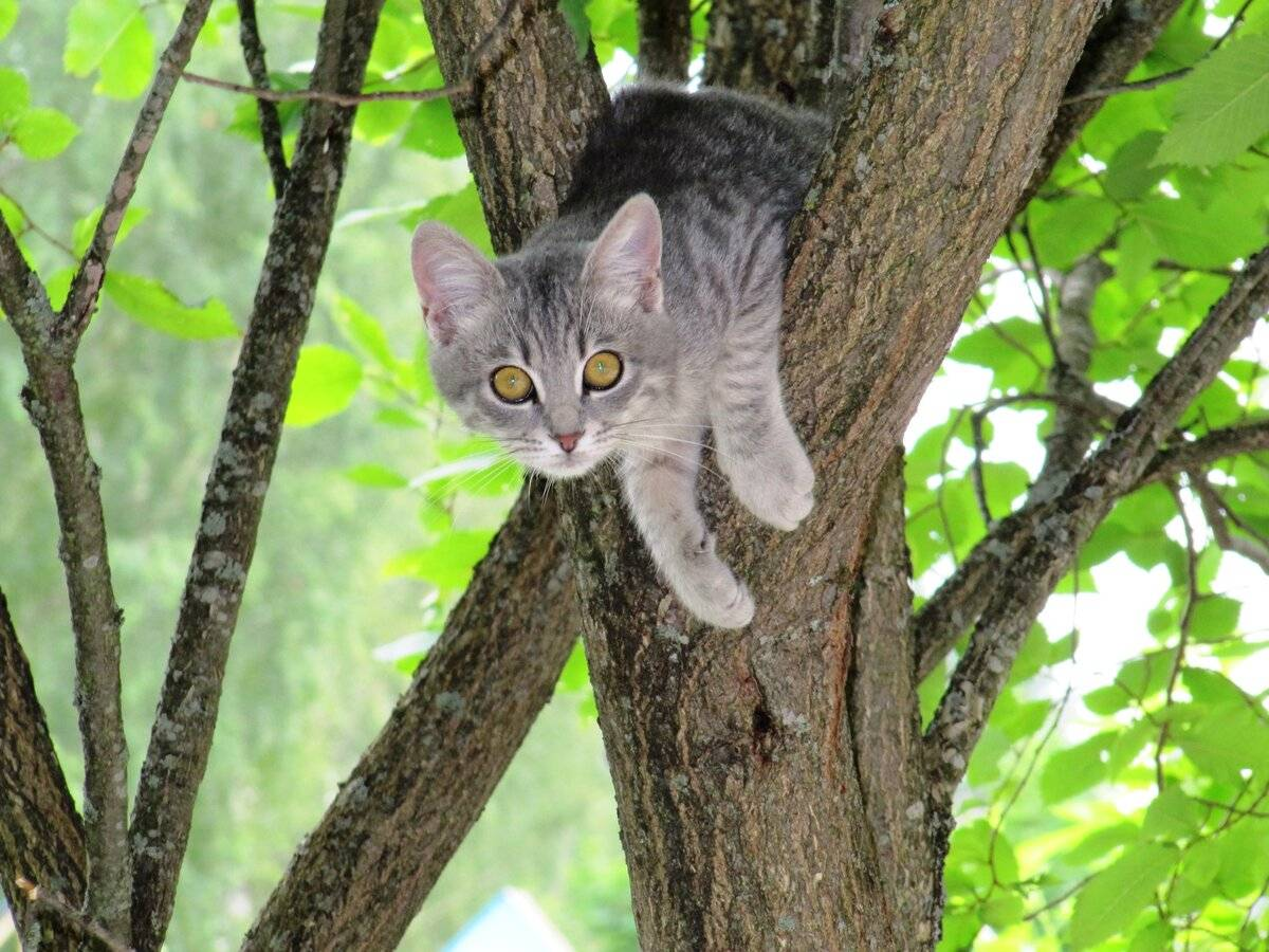 Как снять кота с дерева самостоятельно, какая служба снимает кошку с высокого дерева