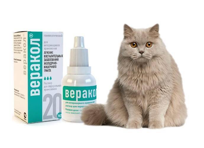 Веракол для кошек: инструкция по применению, капли и уколы, побочные эффекты