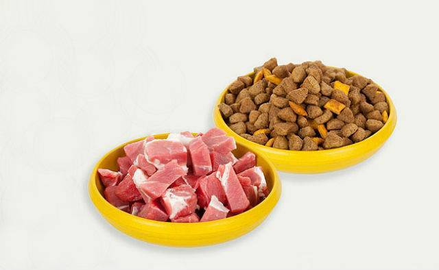 Когда щенку можно давать сухой корм, как кормить сухим кормом щенка