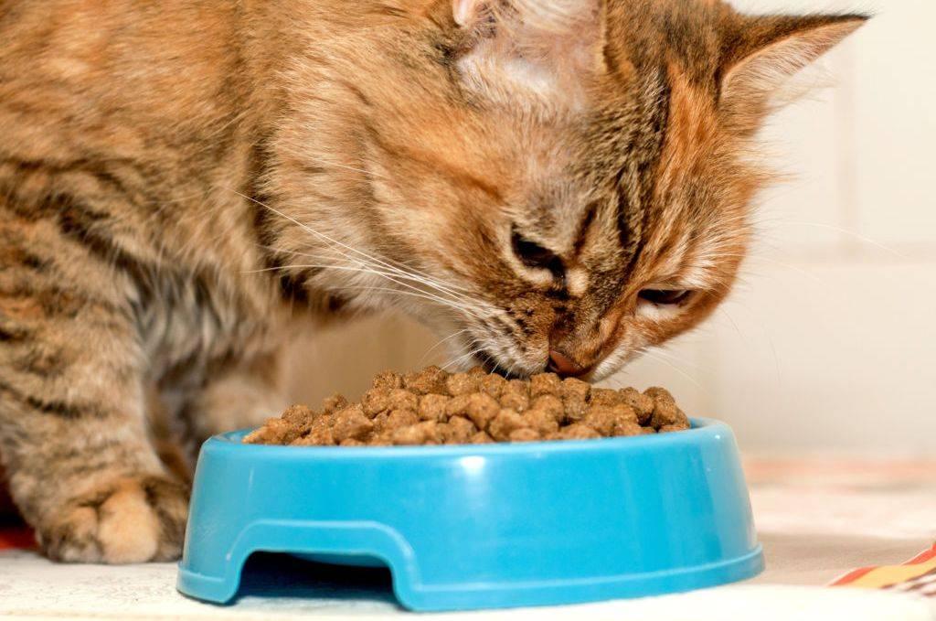 Как помочь кошке пережить жару
