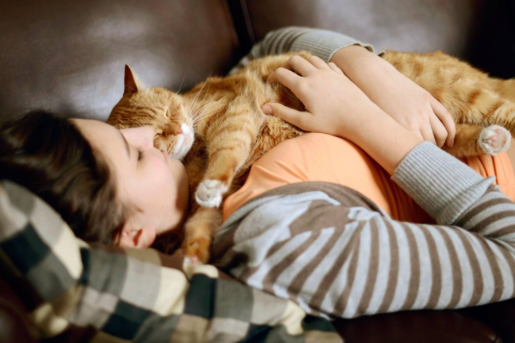 Сколько часов в сутки спят кошки: продолжительность сна котенка и взрослого кота