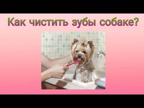Как выполнить чистку зубов собаке в домашних условиях и какие средства, кроме зубной щетки и пасты для этого нужны