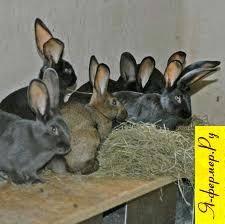 Почему крольчиха не подпускает крола и что делать