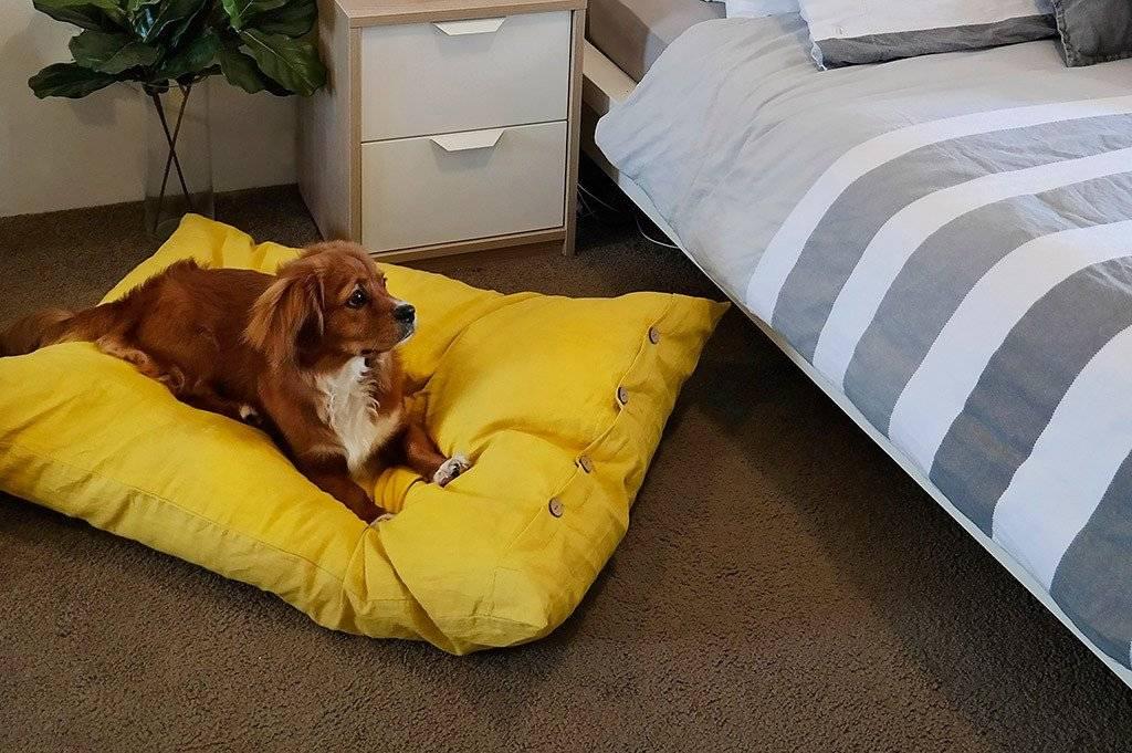 Как быстро уложить собаку спать: инструкция по приучению щенка ко сну ночью