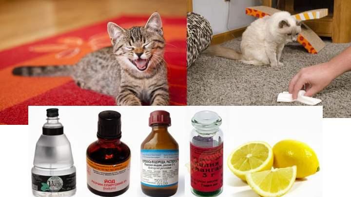 Как избавиться от запаха собачьей мочи в квартире