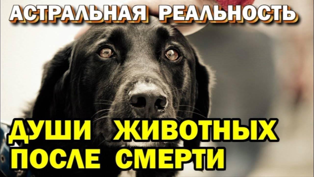 Что происходит с душой собак после смерти: реинкарнация, православие