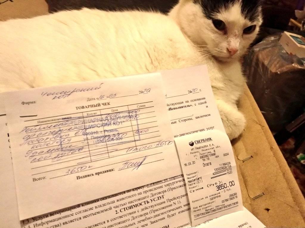 Можно ли оставить кошку на время отпуска? на сколько можно оставлять кошку в одиночестве кошка одна в квартире сколько дней.