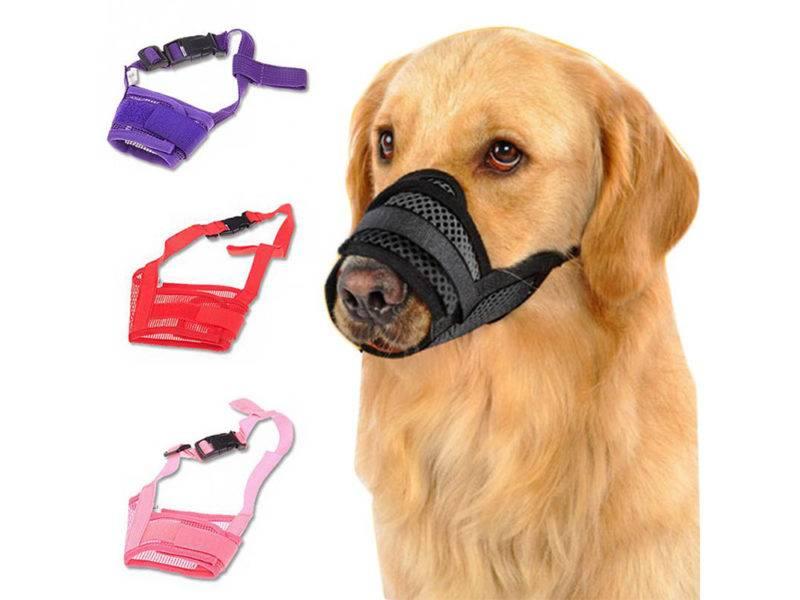 Как правильно одеть намордник на собаку