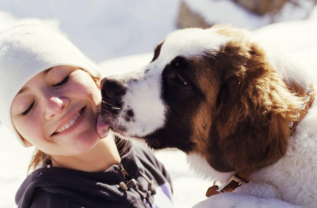 5 самых улыбающихся пород собак