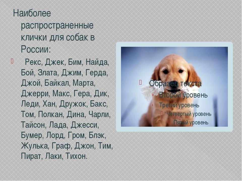 Немецкие клички для собак мальчиков и девочек