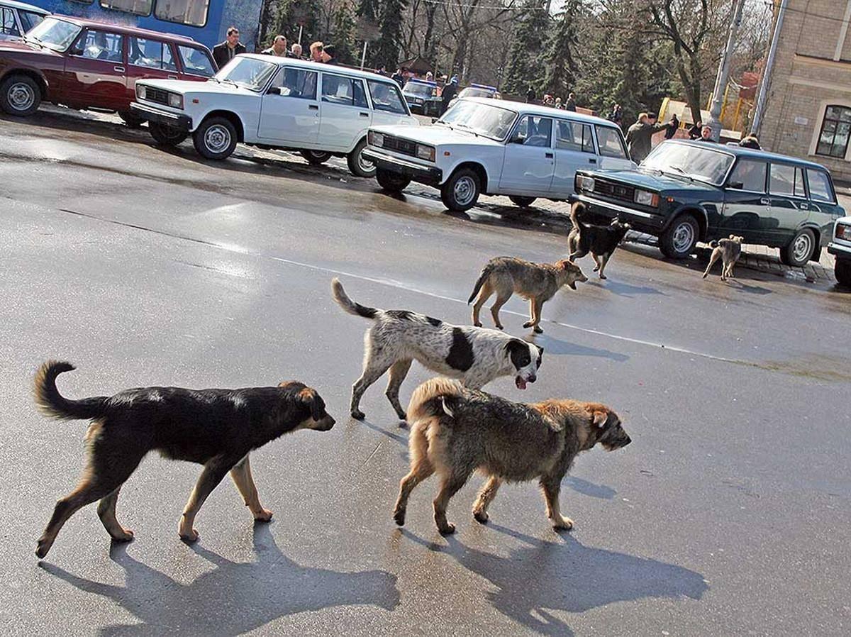 Куда обращаться, если вы заметили бездомных собак в подмосковье