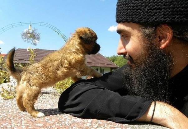 Собака в исламе