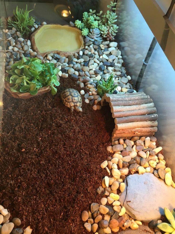 Террариумы для сухопутных черепах в домашнем интерьере | дизайн интерьера