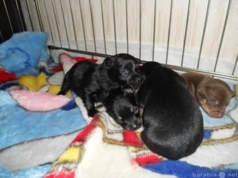 Первые дни щенка в новом доме